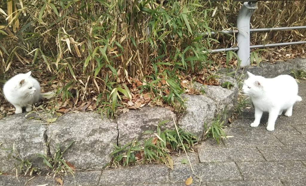 f:id:tarojiroko:20180125121220j:plain