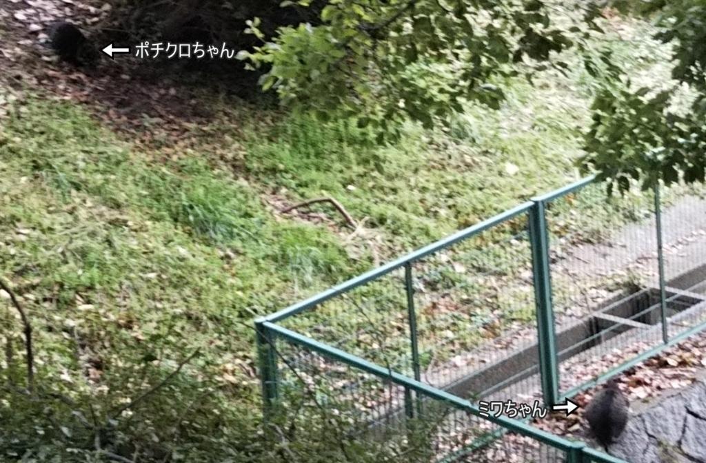 f:id:tarojiroko:20180128100019j:plain