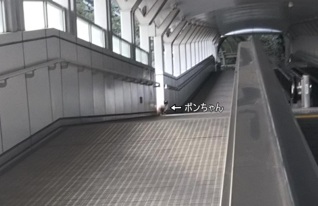 f:id:tarojiroko:20180204155042j:plain