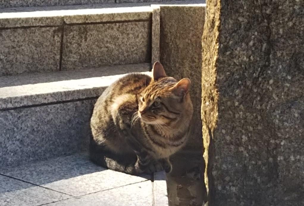 f:id:tarojiroko:20180302133023j:plain