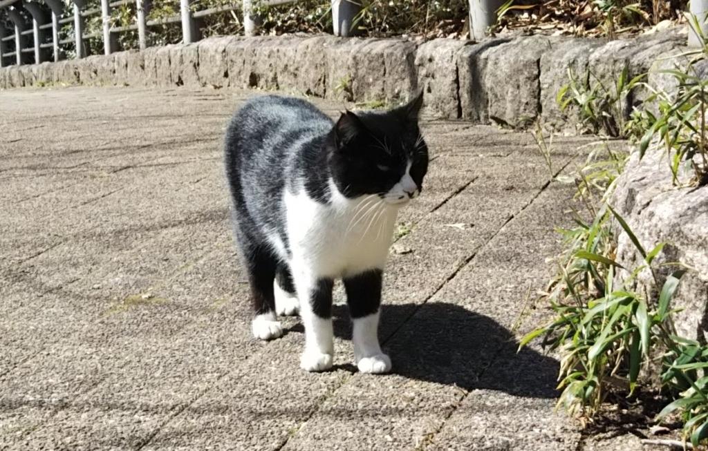 f:id:tarojiroko:20180306120434j:plain