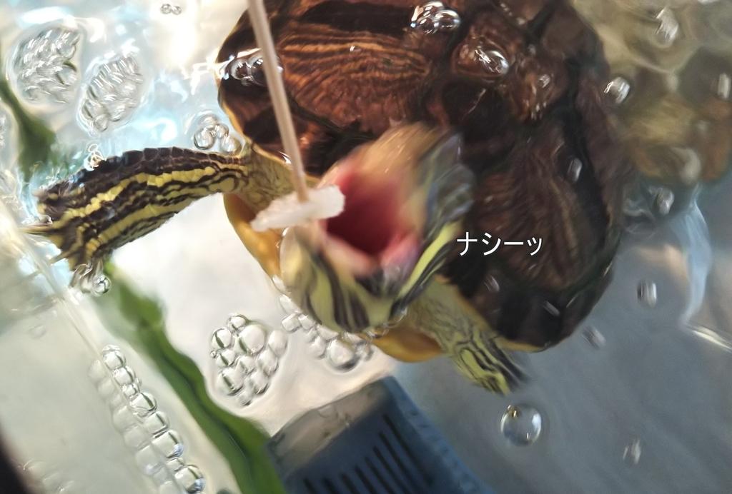 f:id:tarojiroko:20180920101736j:plain