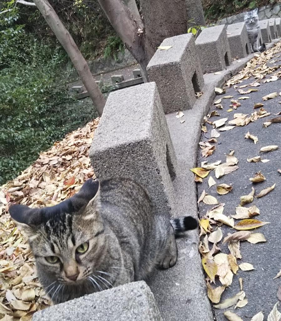 f:id:tarojiroko:20181116144359j:plain