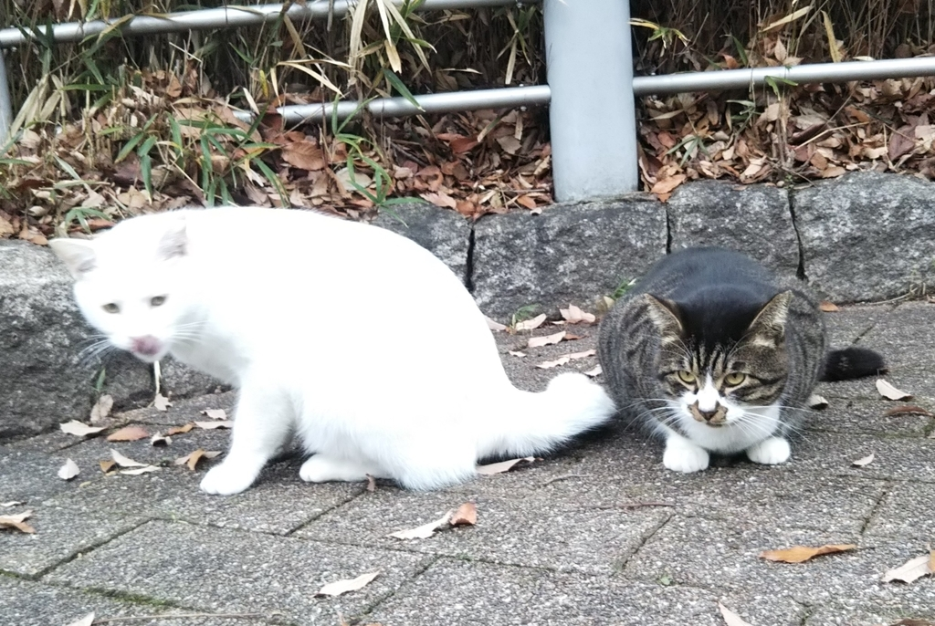 f:id:tarojiroko:20181223142402j:plain