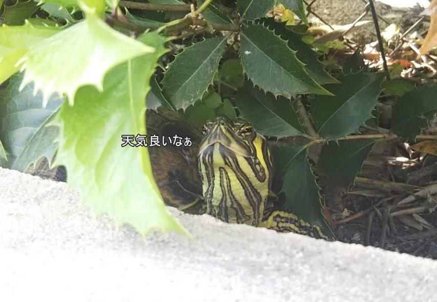 f:id:tarojiroko:20190519101341j:plain