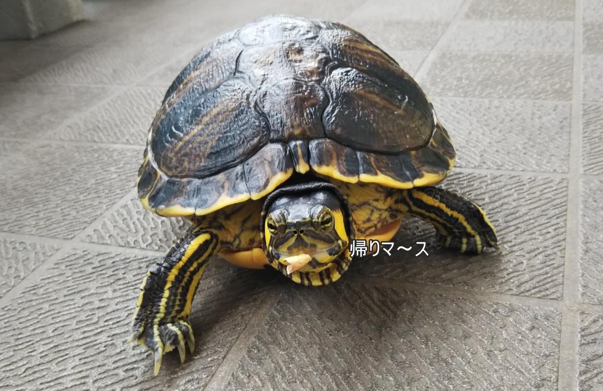 f:id:tarojiroko:20190622150412j:plain