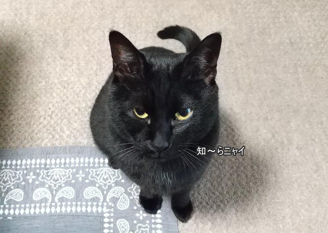 f:id:tarojiroko:20191223173602j:plain