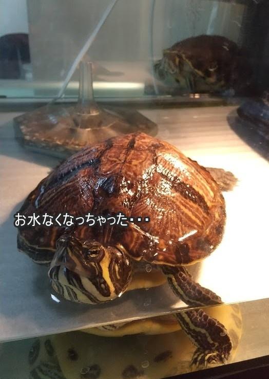 f:id:tarojiroko:20200210153410j:plain