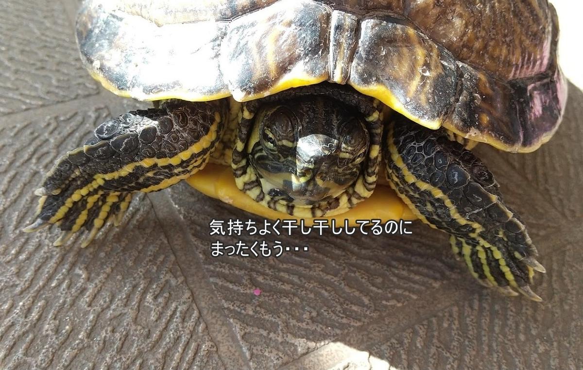 f:id:tarojiroko:20200228192739j:plain