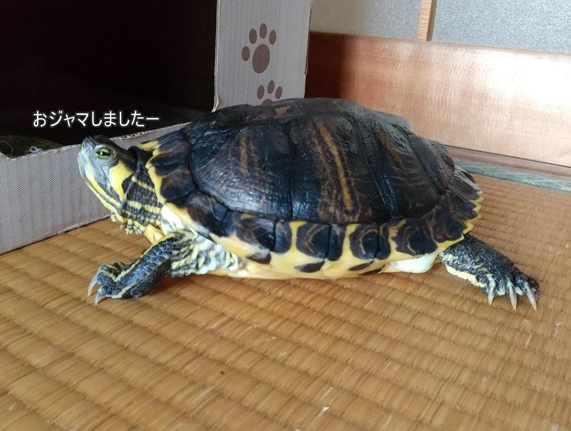 f:id:tarojiroko:20200413191226j:plain
