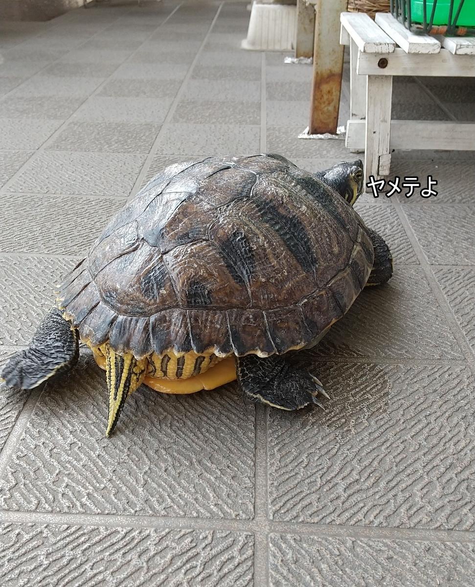 f:id:tarojiroko:20210409141218j:plain