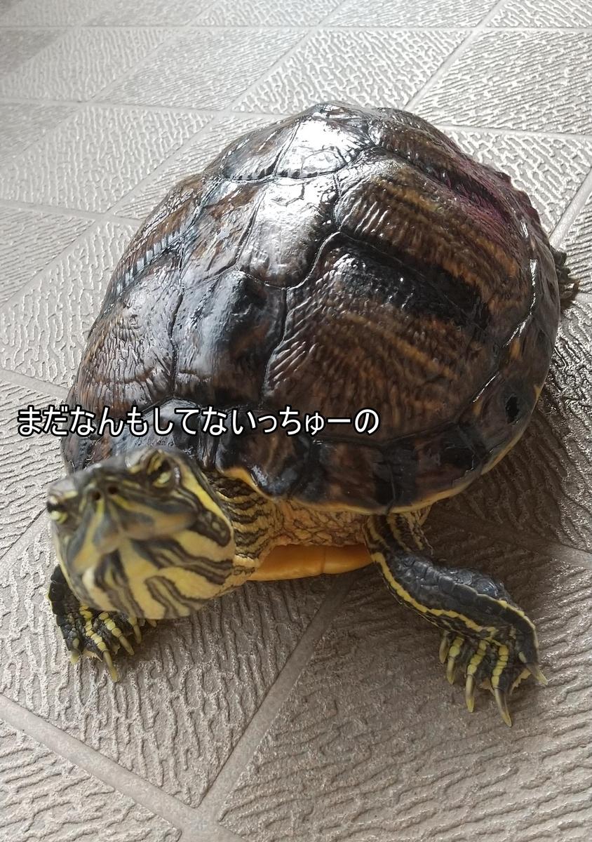 f:id:tarojiroko:20210915133919j:plain
