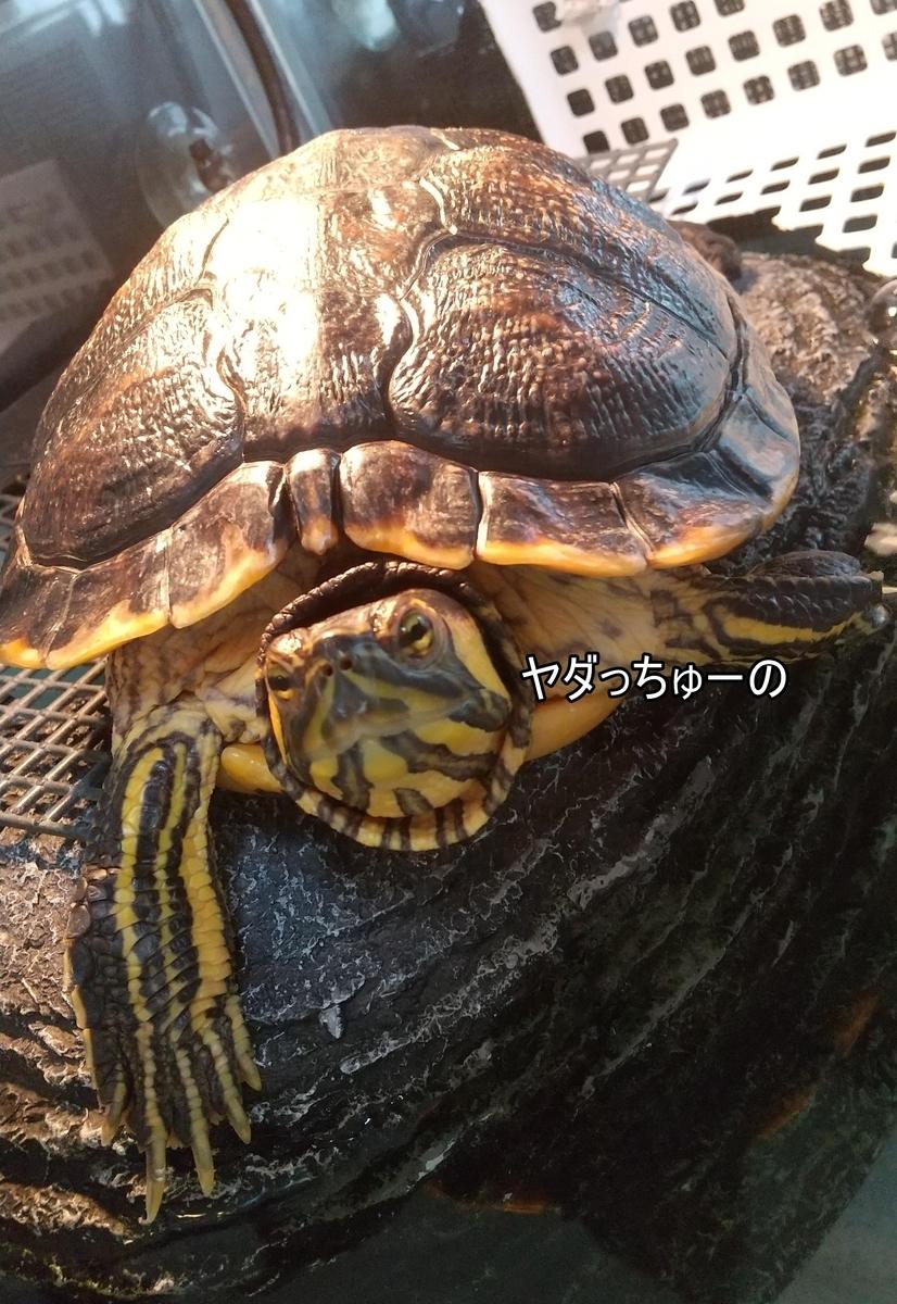 f:id:tarojiroko:20210915134301j:plain