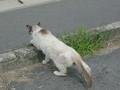 必死で逃げる猫さん