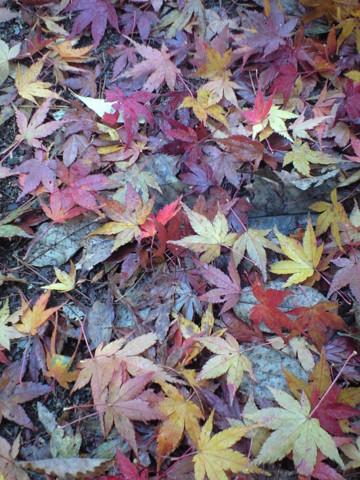 f:id:tarosatarosa:20081112094312j:image