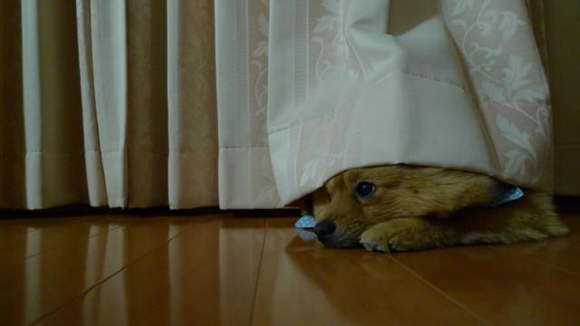 f:id:tarosatarosa:20090208223152j:image