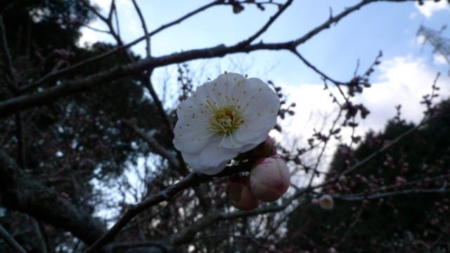 f:id:tarosatarosa:20090211142027j:image