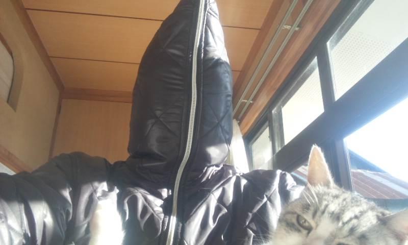 Keikoさんからのリクエストです バカ猫ちらり