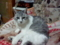 バカ猫 その16