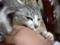 バカ猫 その15