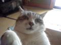 バカ猫 その12