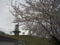 曇りの風車と桜