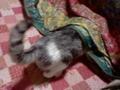 バイバイバカ猫 その19