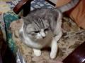 バカ猫 その18