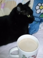 コーヒー牛乳部