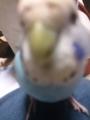 鳥が異常接近する