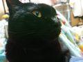 猫が異常接近する