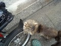 [猫]猫とSTRIDA