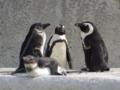 [風景]今日のペンギン