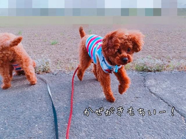 f:id:taruto-rasuku_maaya:20190424125310j:image