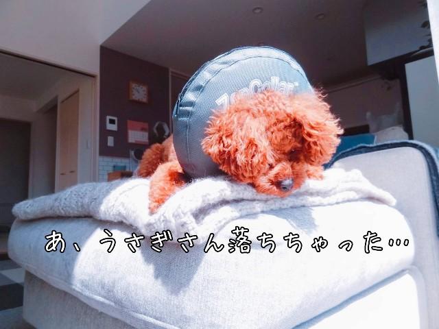 f:id:taruto-rasuku_maaya:20190428180844j:image