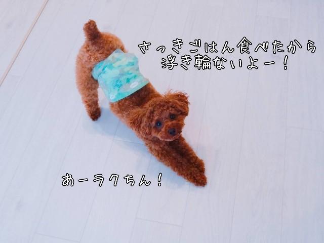 f:id:taruto-rasuku_maaya:20190430182020j:image