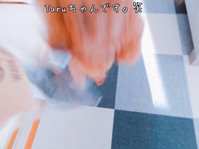 f:id:taruto-rasuku_maaya:20190511235312j:image