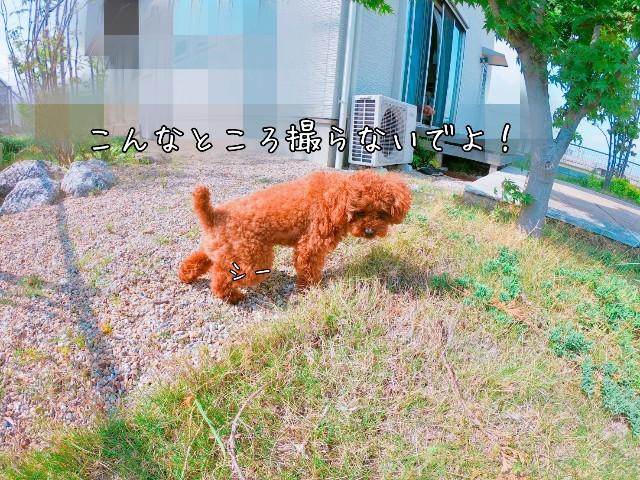 f:id:taruto-rasuku_maaya:20190515220633j:image