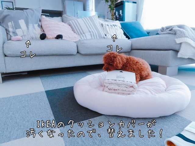 f:id:taruto-rasuku_maaya:20190521221404j:image