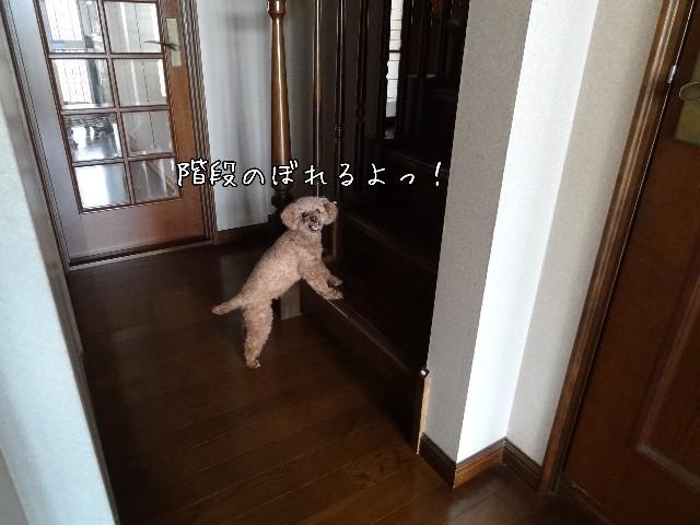 f:id:taruto-rasuku_maaya:20190526224320j:image