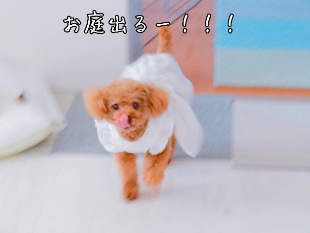 f:id:taruto-rasuku_maaya:20190604211655j:image