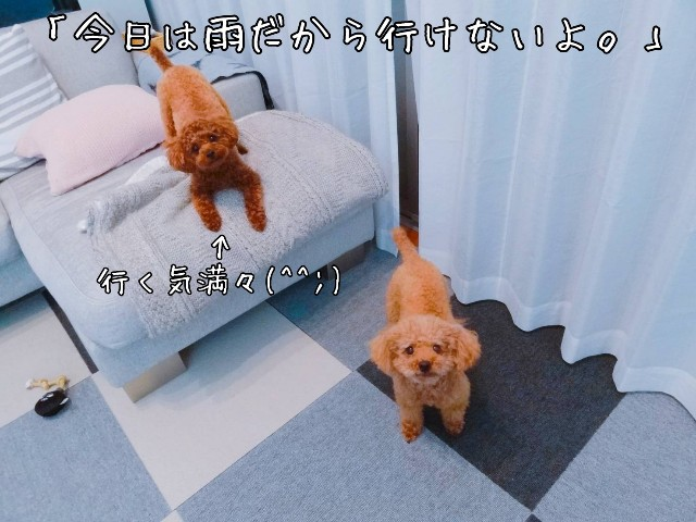 f:id:taruto-rasuku_maaya:20190607220436j:image