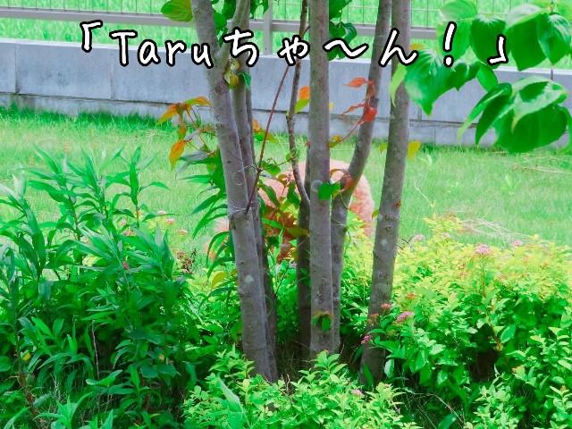 f:id:taruto-rasuku_maaya:20190611172816j:image