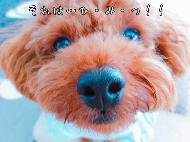 f:id:taruto-rasuku_maaya:20190617221305j:image