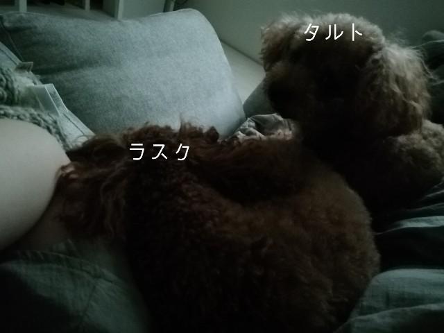f:id:taruto-rasuku_maaya:20190923210018j:image