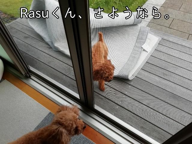 f:id:taruto-rasuku_maaya:20190927184853j:image
