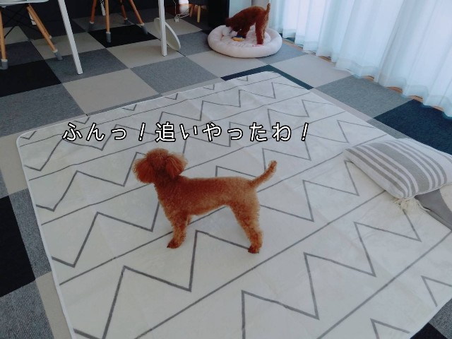 f:id:taruto-rasuku_maaya:20190930201848j:image