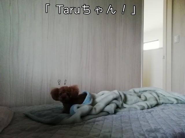 f:id:taruto-rasuku_maaya:20191011200649j:image