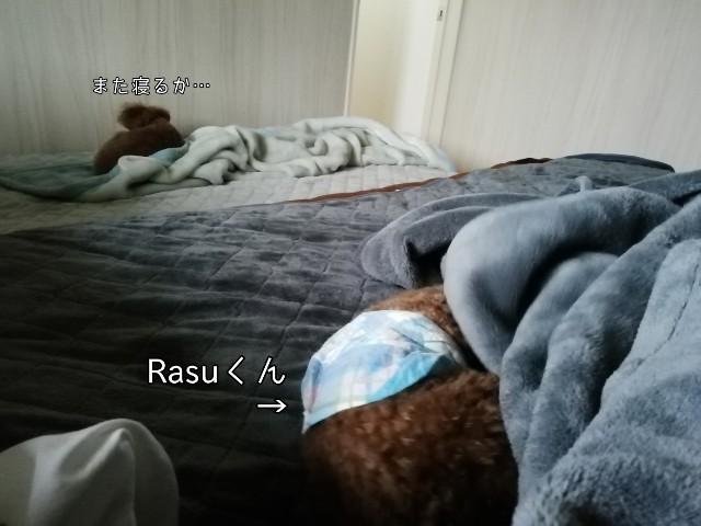 f:id:taruto-rasuku_maaya:20191011200828j:image