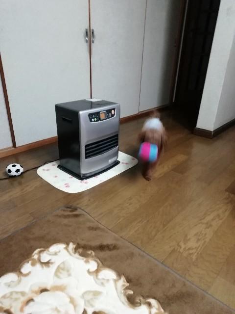 f:id:taruto-rasuku_maaya:20191206175731j:image
